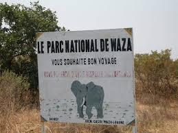 CAMEROUN : DES ELEPHANTS EN DIVAGATION