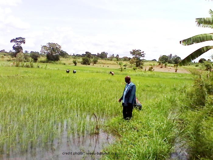 BURUNDI : LA BAD OFFRE 20 MILLIONS $ POUR SA SÉCURITÉ ALIMENTAIRE.