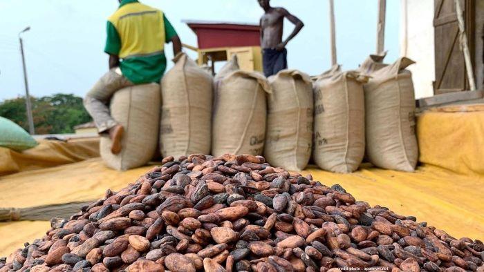 CÔTE D'IVOIRE : UN IMPORTANT STOCK DE CACAO INVENDU!
